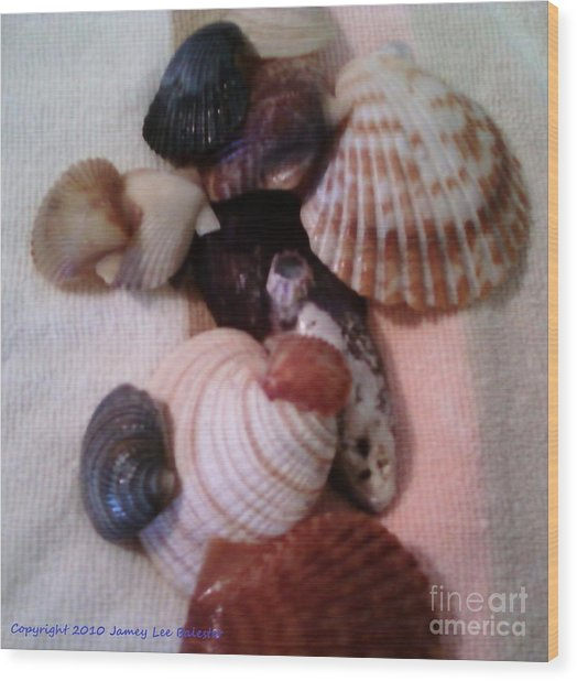Seashells Wood Print by Jamey Balester