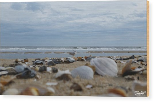Seashells Seagull Seashore Wood Print