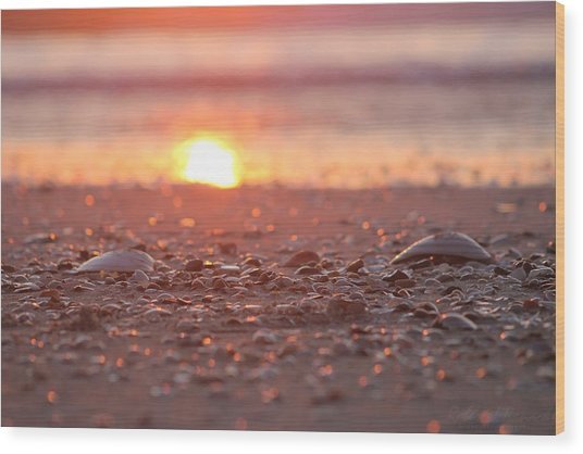 Seashells Suns Reflection Wood Print