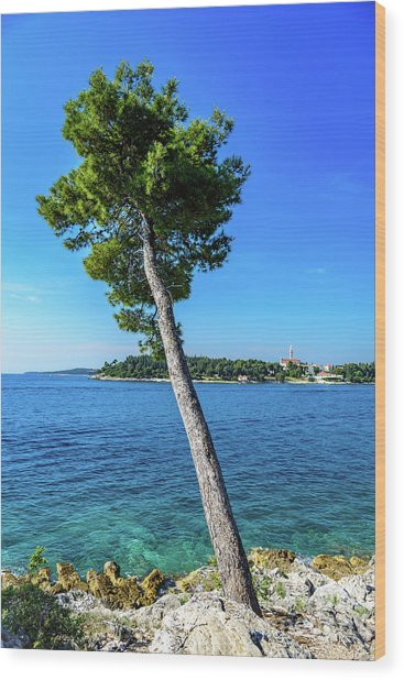 Seaside Leaning Tree In Rovinj, Croatia Wood Print