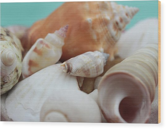 Seaside Seashells Wood Print