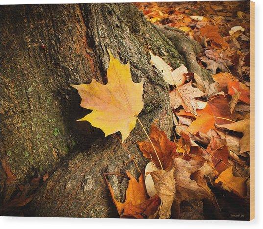 Seasonal Beauty  Wood Print