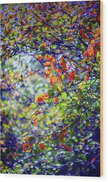 Seasons Change Wood Print