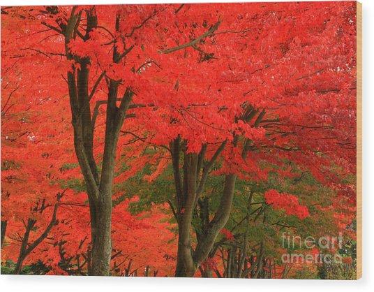 Season's Change Wood Print