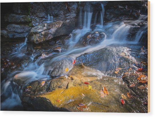 Seasons Collide Wood Print
