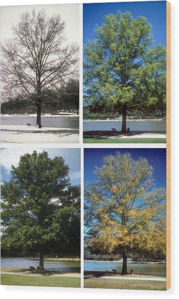 Seasons Of Time Wood Print
