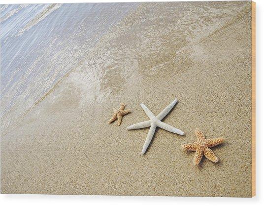 Seastars On Beach Wood Print