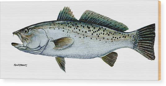 Seatrout Wood Print