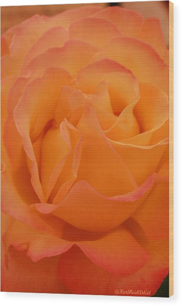 Seattle Rose Wood Print