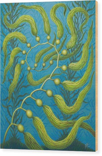 Seaweed Spiral Wood Print