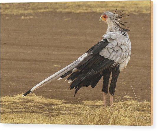 Secretary Bird Tanzania Wood Print
