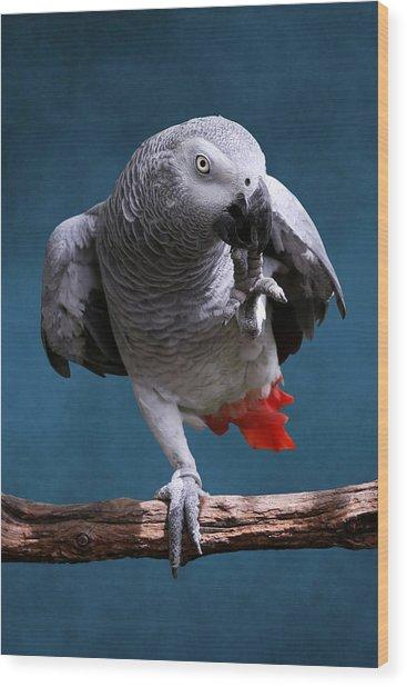 Secretive Gray Parrot Wood Print