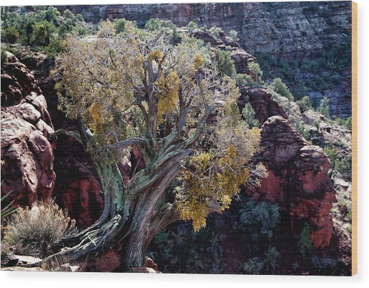 Sedona Tree #2 Wood Print