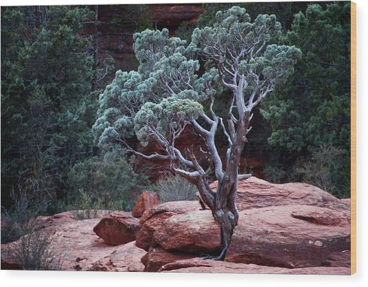 Sedona Tree #3 Wood Print