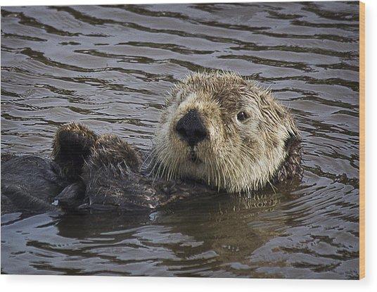 See Otter Posing Wood Print