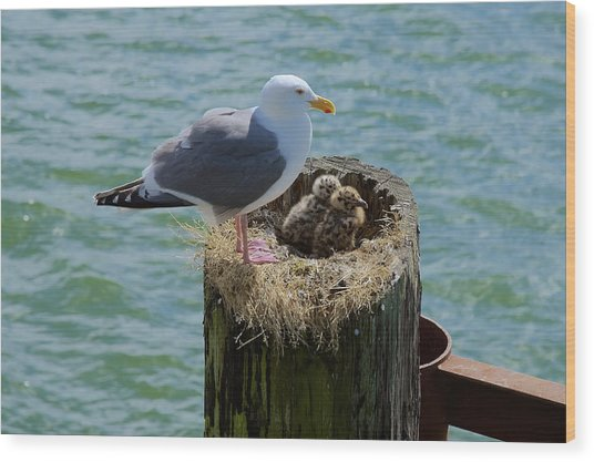 Seagull Family Wood Print
