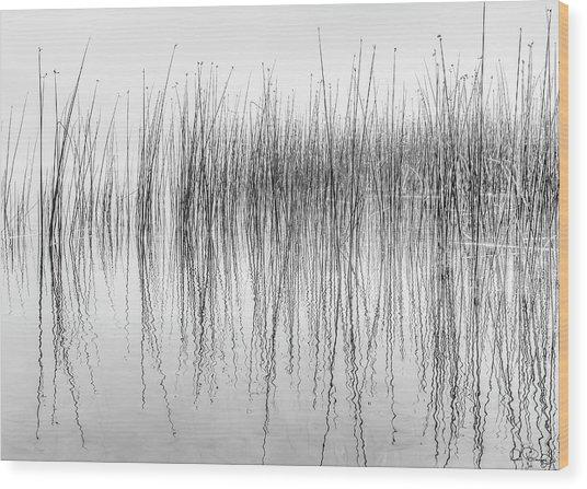 Seismograph Wood Print