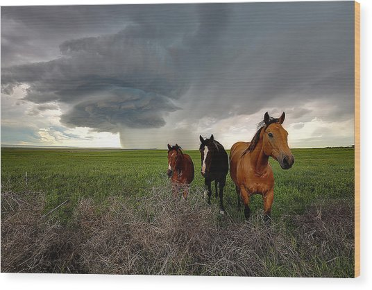 Sensing The Storm #3 Wood Print