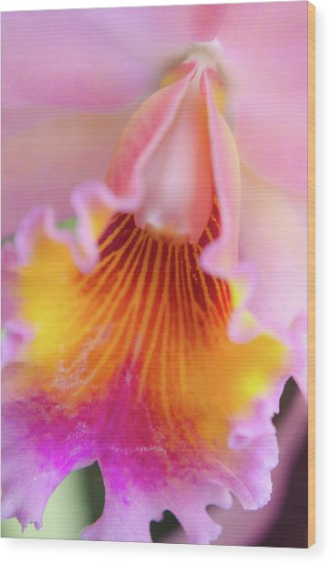 Sensual Floral Wood Print