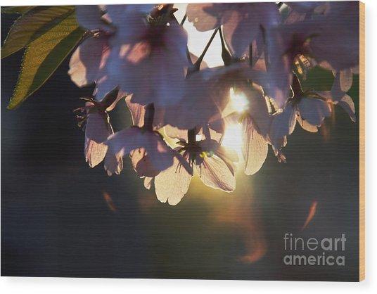 Sentimental Blooming Wood Print by Hideaki Sakurai