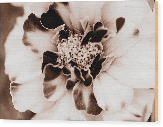 Sepia Marigold Wood Print