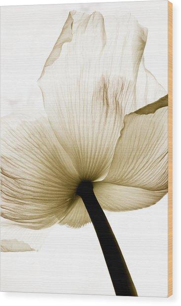 Sepia Poppy Flower Wood Print by Frank Tschakert