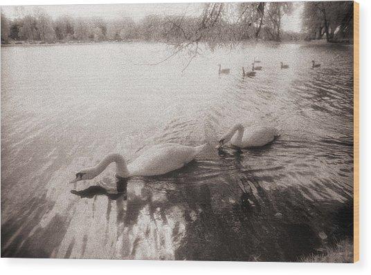 Sepia Swans Wood Print