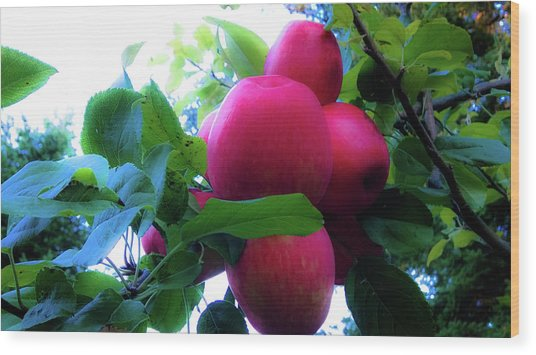 Wood Print featuring the photograph September Harvest by Pacific Northwest Imagery