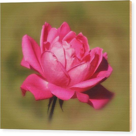 September Rose Up Close Wood Print