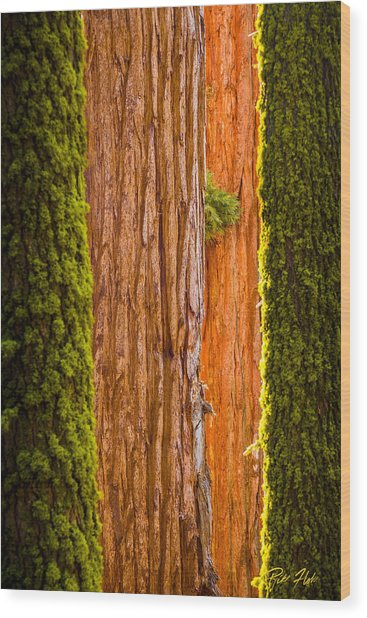 Sequoia Abstract Wood Print