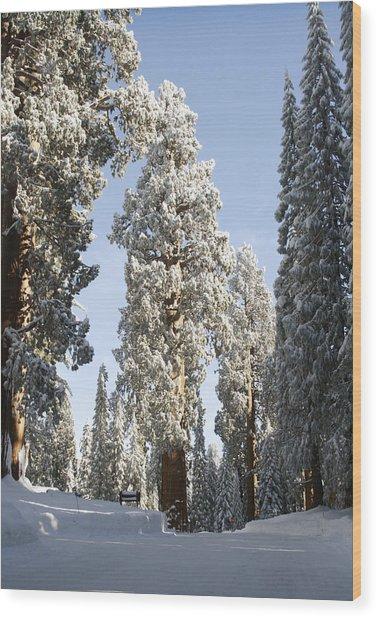 Sequoia National Park 4 Wood Print