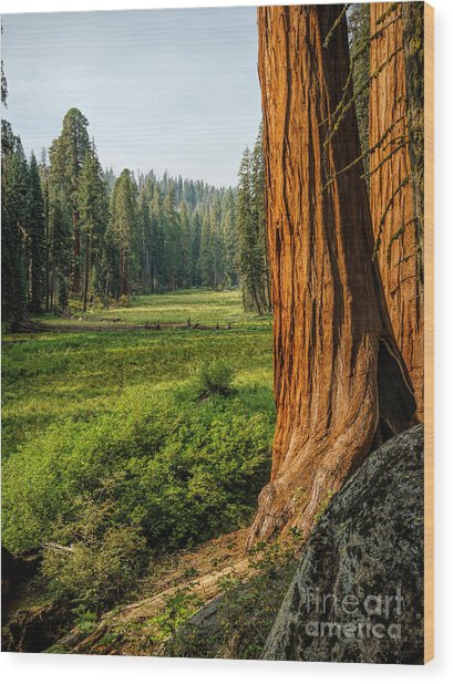 Sequoia Np Crescent Meadows Wood Print