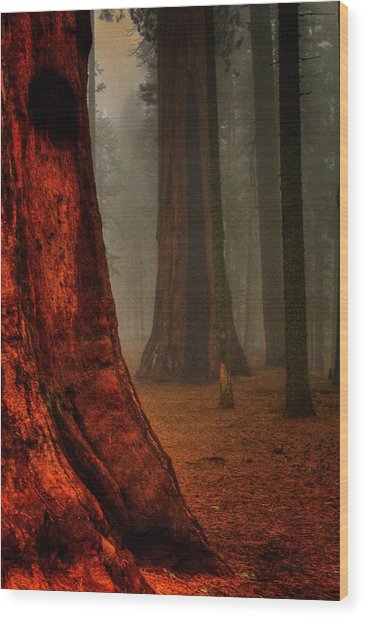 Sequoias In The Clouds Wood Print