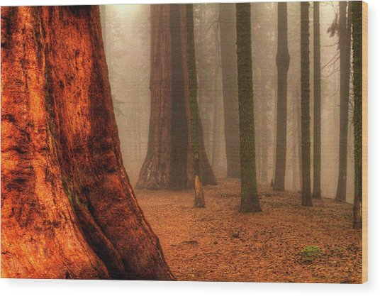 Sequoias Touching The Clouds Wood Print