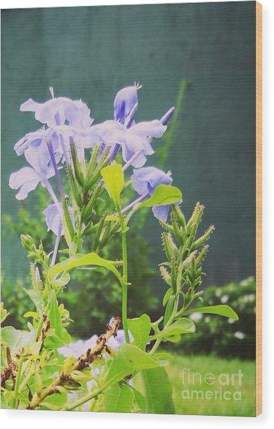 Serene Purple Wood Print