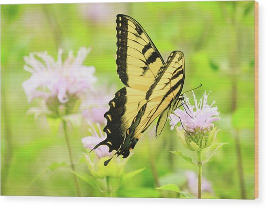 Series Of Yellow Swallowtail #4 Of 6 Wood Print