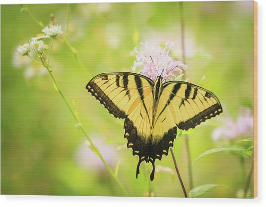 Series Of Yellow Swallowtail #6 Of 6 Wood Print