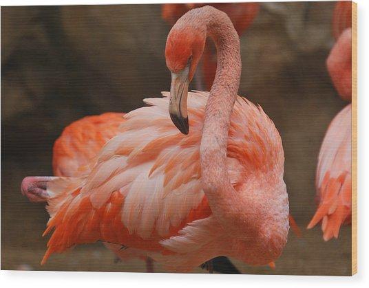 Serious Flamingo Wood Print by Teresa Blanton