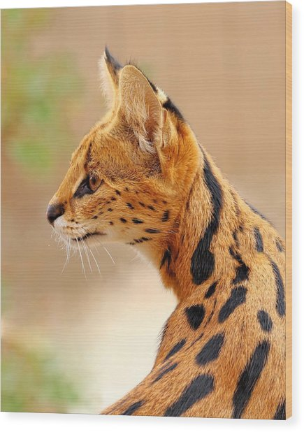 Serval - Extreme Hunter Wood Print