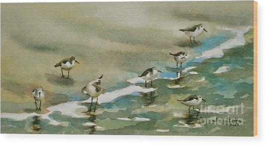 Seven Sandpipers At The Seashore  Wood Print