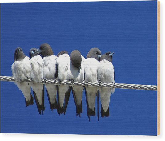 Seven Swallows Sitting Wood Print