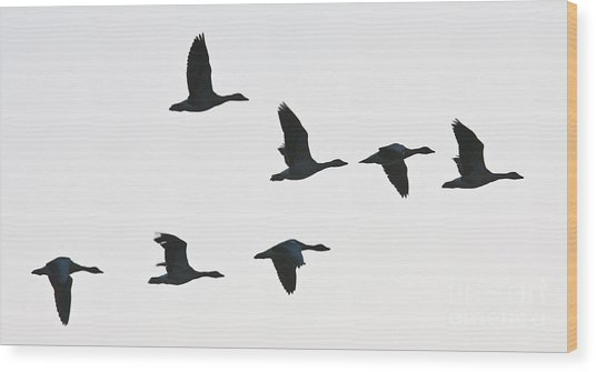Sevenfold Geese Wood Print