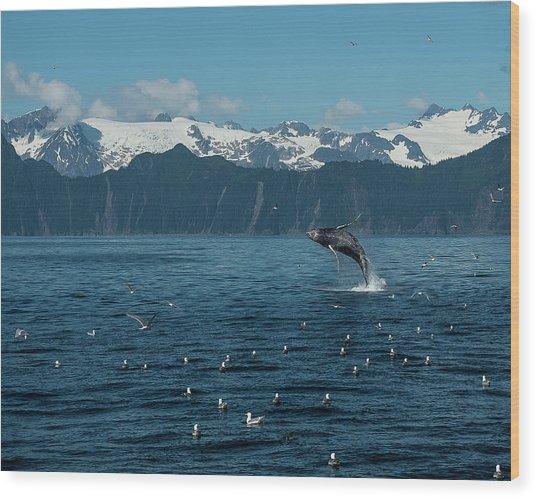 Seward Whale Breach Wood Print