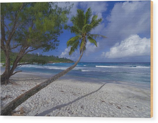 Seychelles Beach Wood Print