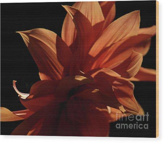 Sfgarden01 Wood Print