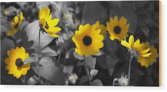 Shaded Daisies Wood Print