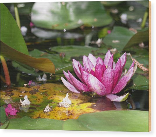 Shaded Lotus Wood Print by James Granberry