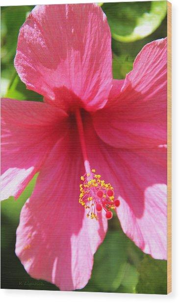 Shades Of Pink - Hibiscus Wood Print