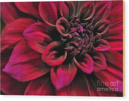 Shades Of Red - Dahlia Wood Print