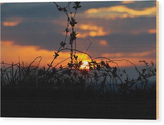 Shades Of Sun Wood Print